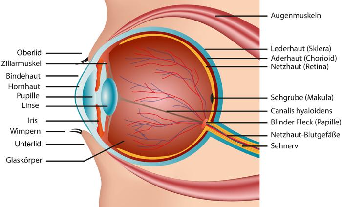 Das Auge - Eisen Optikergeschäft AG - Ihr Optiker in Winterthur